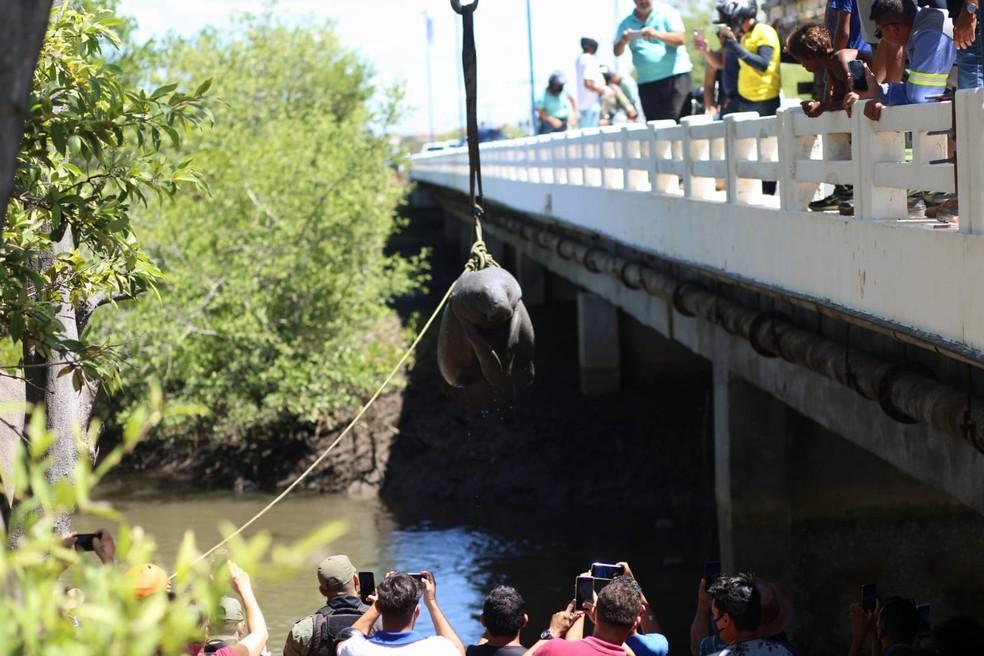 Peixe-boi é encontrado morto após encalhar no litoral do Piauí  — Foto: Divulgação