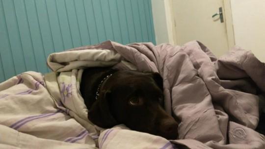 Cachorra da raça labrador é baleada por vigilante dentro do campus da UCS em Bento Gonçalves