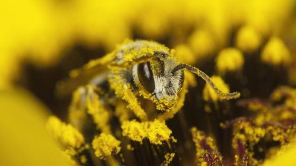 No cálculo de Constanza, o valor da polinização é o custo que é evitado quando as abelhas fazem esse serviço para nós, 'gratuitamente'  — Foto: Getty Images via BBC