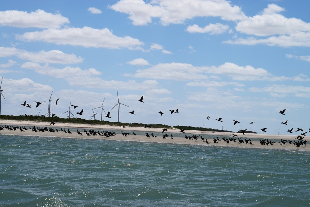 Patos selvagens usam as areias das praias desertas de Guamaré como campo de pouso e repouso - Guamaré – RN – Turismo – Novembro de 2017 (Foto: Maxwell Almeida)