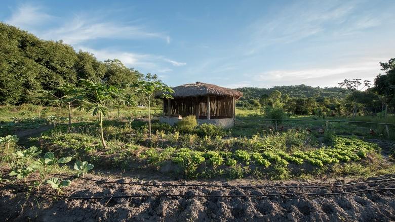 projeto caruanas-danone-preservação (Foto: Reprodução/Facebook)