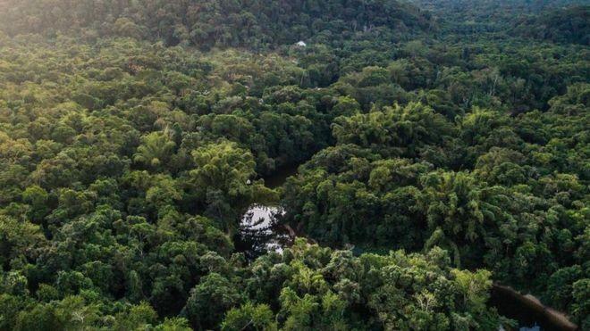 Mata Atlântica é alvo de recuperação florestal no Brasil (Foto: GETTY IMAGES via BBC)