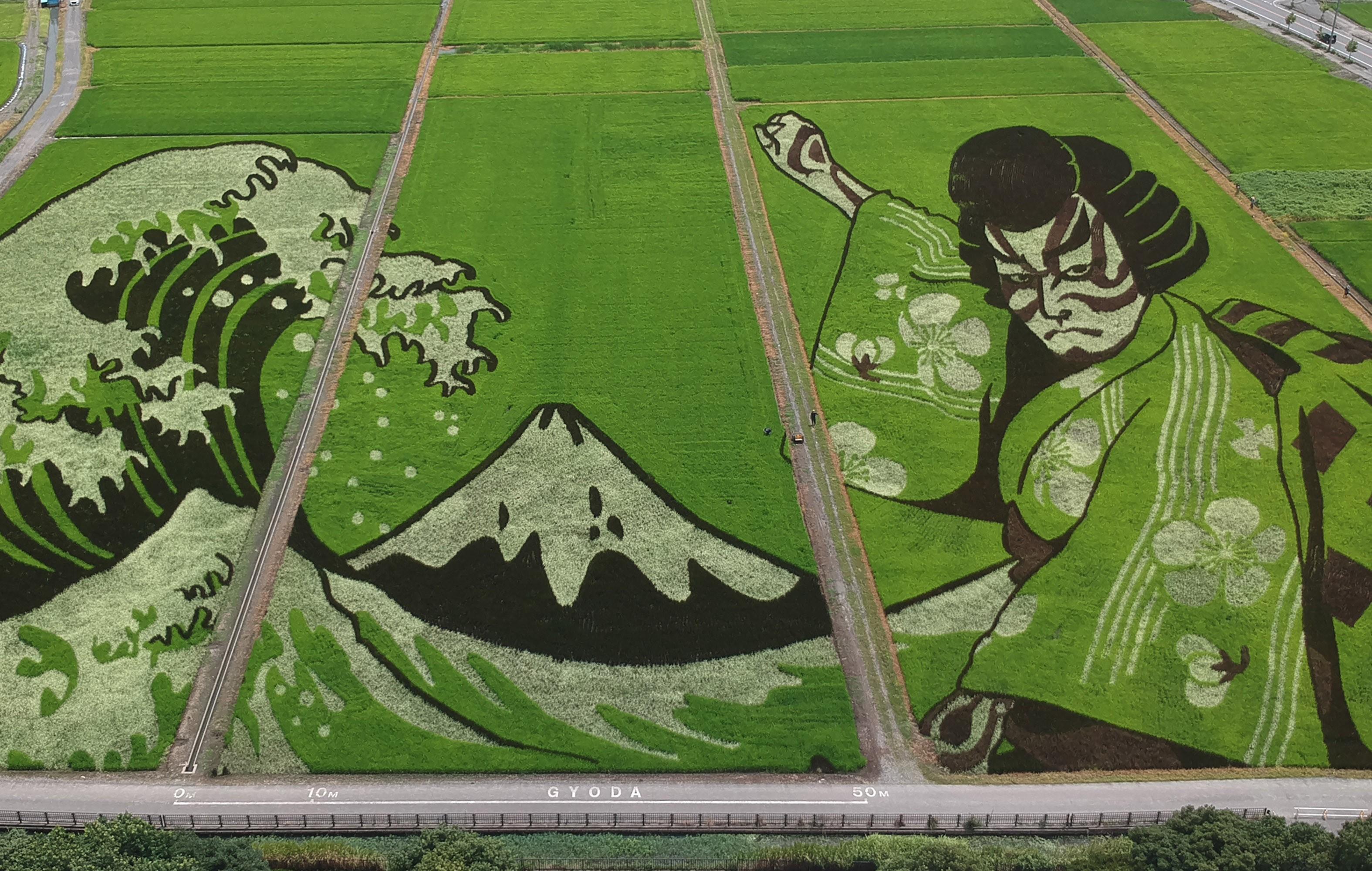 Obra de arte em campo de arroz no Japão celebra Jogos Olímpicos de Tóquio