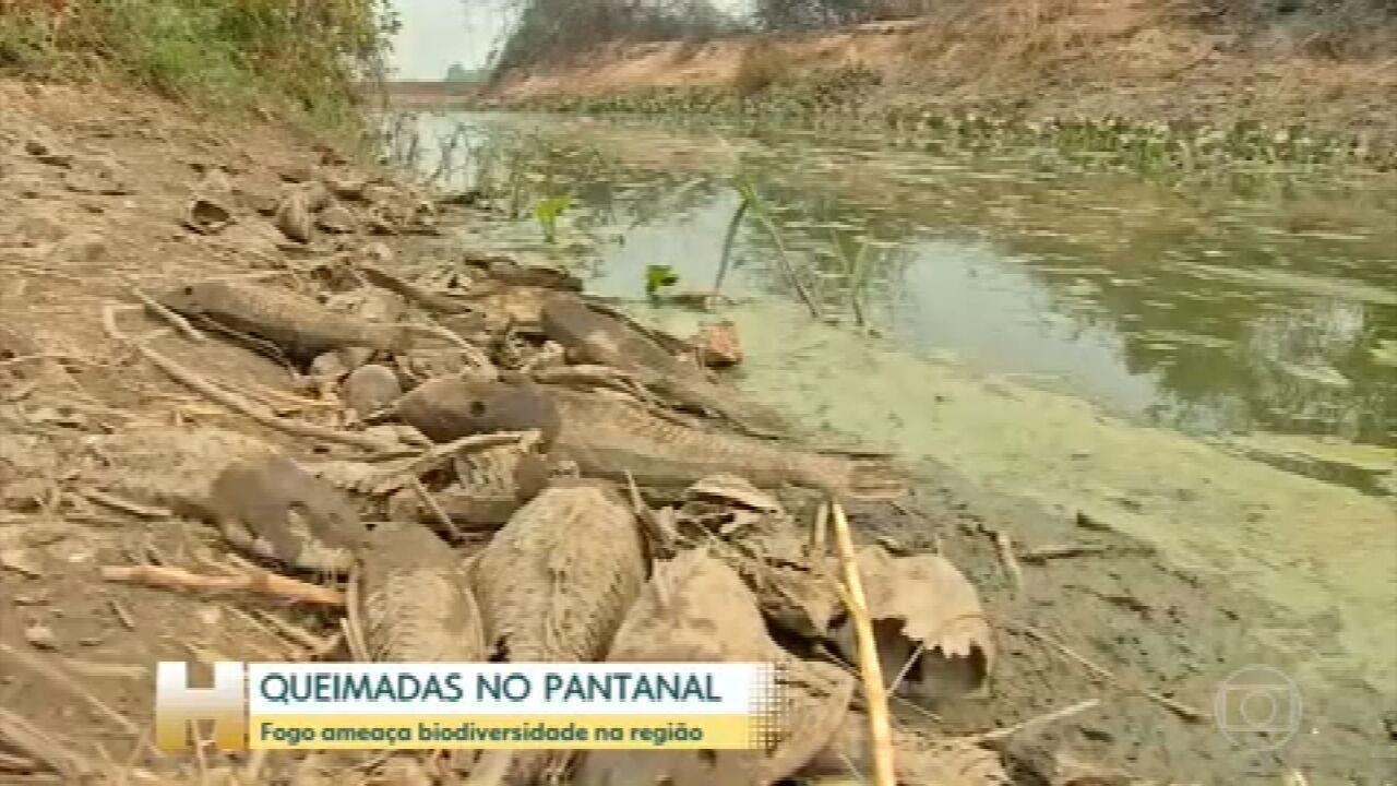 Fogo ameaça a biodiversidade do Pantanal