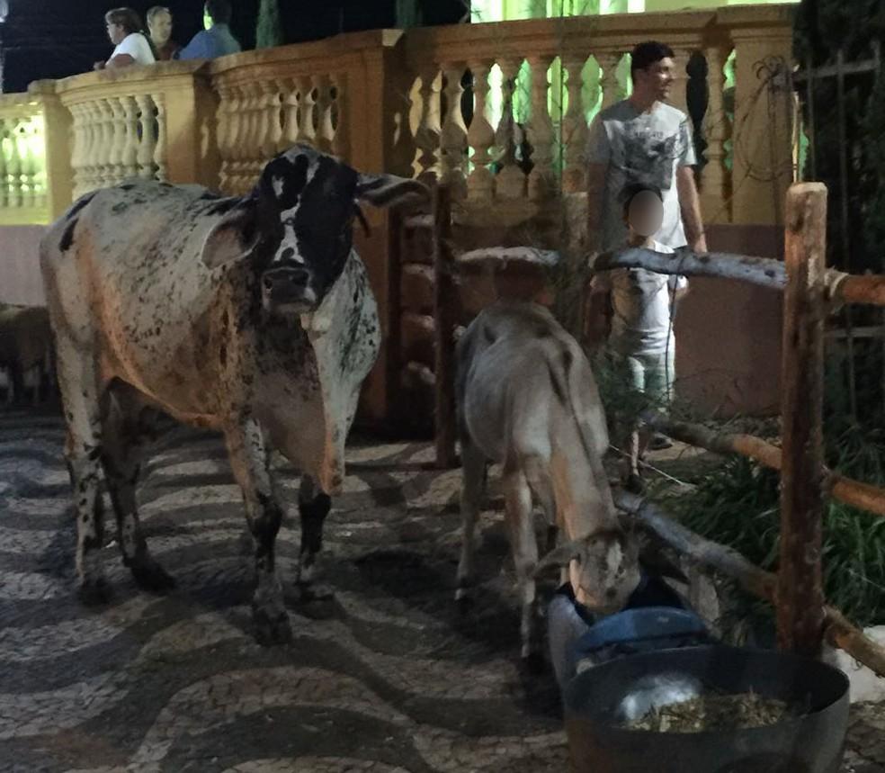 Prefeitura sustenta que animais estavam alimentados e hidratados, e com supervisão de um veterinário (Foto: Prefeitura de Torrinha / Divulgação )