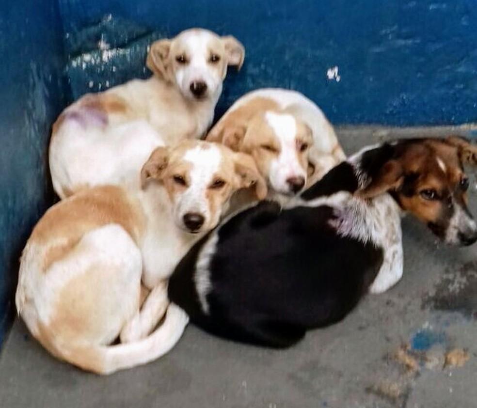 Animais foram resgatados e esperam por adoção no Centro de Zoonoses de Botucatu (Foto: Unidade de Vigilância de Zoonoses de Botucatu / Divulgação)