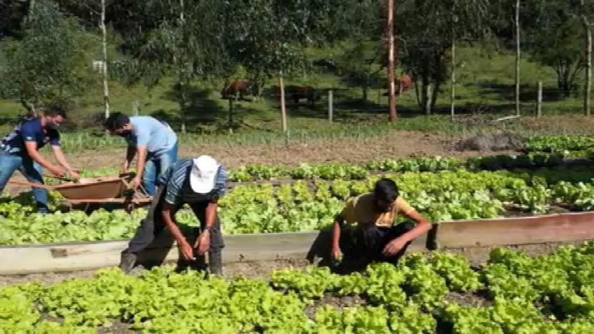 Famílias que perderam renda na pandemia plantam o que comer em hortas comunitárias no Paraná