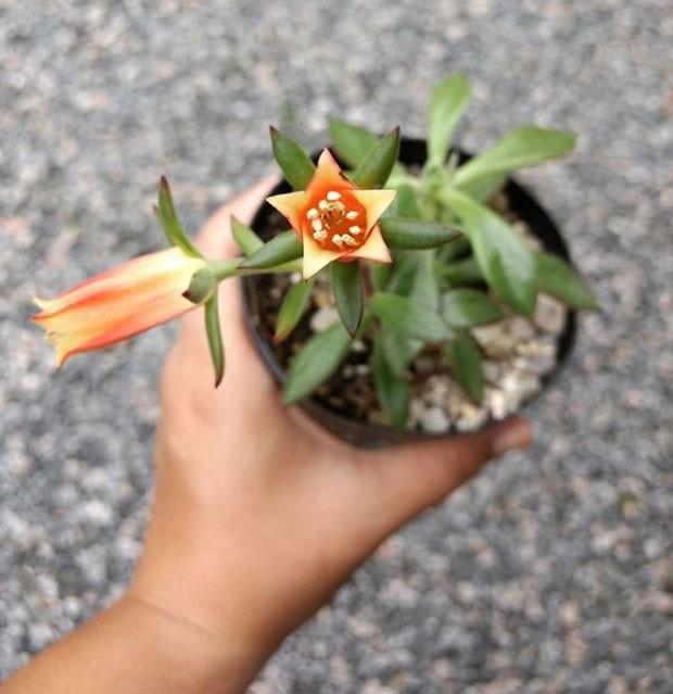 plantasdecasa-instagram (Foto: Reprodução/ Instagram)