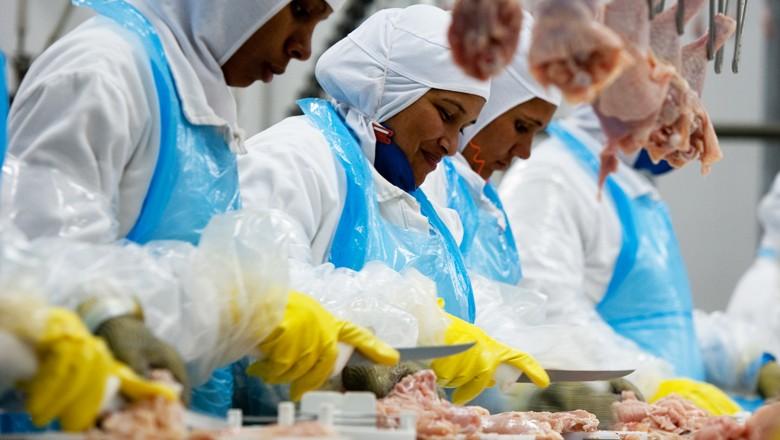 frigorifico-aves-frango-galinha (Foto: Globo Rural)