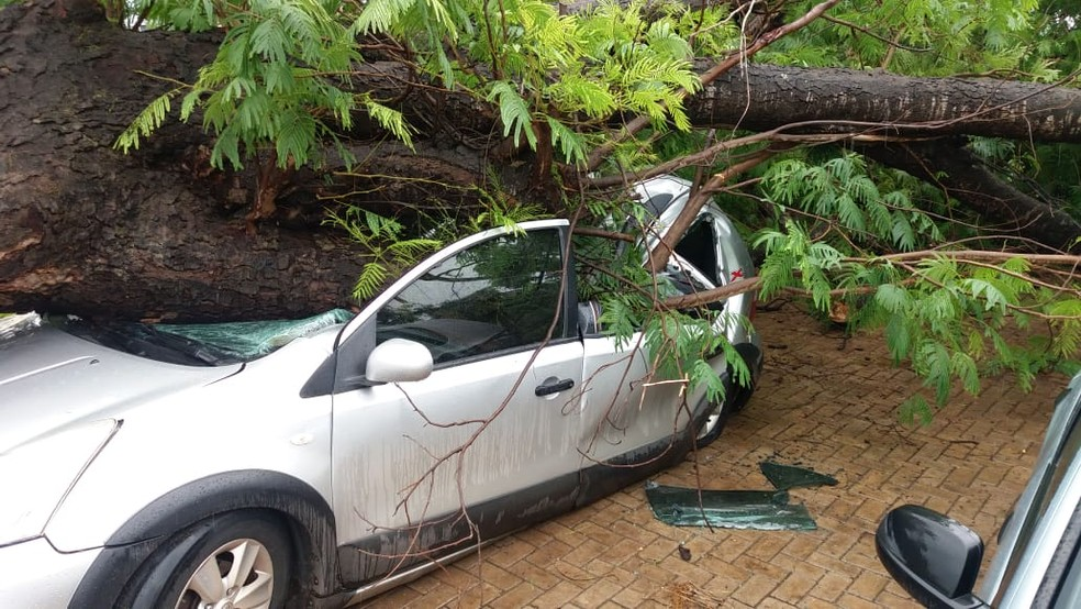 Queda de árvore aconteceu após tempestade que atingiu a capital — Foto: Dinaredes Parente/TV Anhanguera