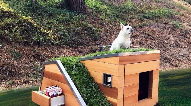 Casa de cachorro  (Foto: Studio Schicketanz)