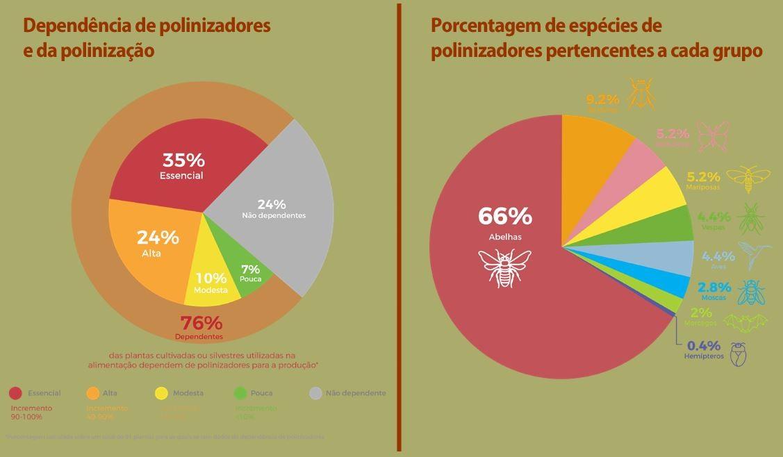 76% das espécias cultivadas no Brasil dependem dos polinizadores.  (Foto: Relatório Temático sobre Polinização, Polinizadores e Produção de Alimentos no Brasil)