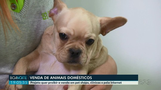 Projeto de lei quer proibir a venda de animais domésticos
