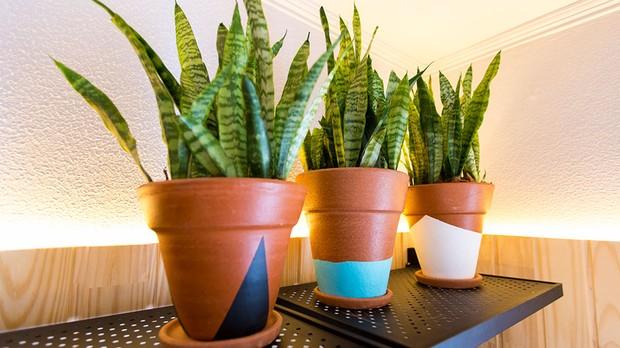 Aprenda A Customizar Vasos De Barro Da Sua Horta Domestica