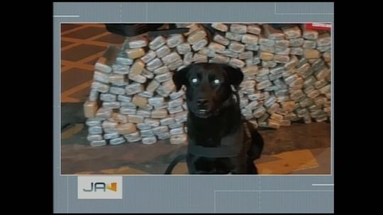 Ação conjunta da polícia encontra pacotes de maconha escondidos em fundo falso de carreta no Oeste de SC