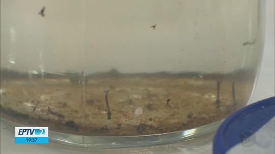 Projeto desenvolvido no Inatel pode ajudar no combate ao Aedes aegypti