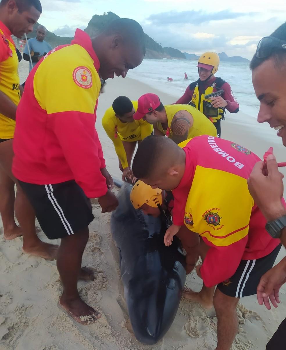 Golfinho é resgatado por Bombeiros na Zona Sul do Rio — Foto: Reprodução Redes Sociais