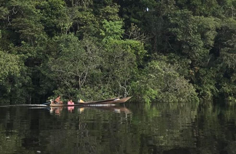 Bacia do rio Negro, no noroeste amazônico, onde população de ariranhas vem se recuperando (Foto: JOÃO FELLET/BBC)