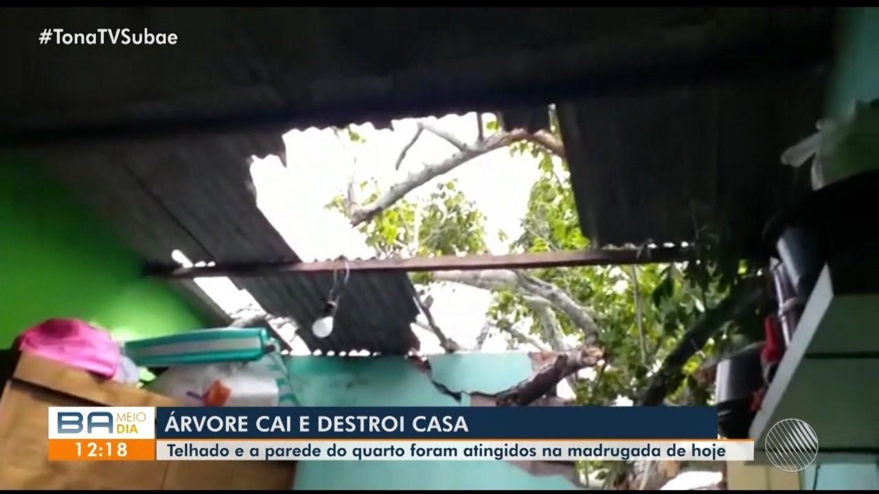 Casa fica destruída após ser atingida por árvore na cidade de Feira de Santana