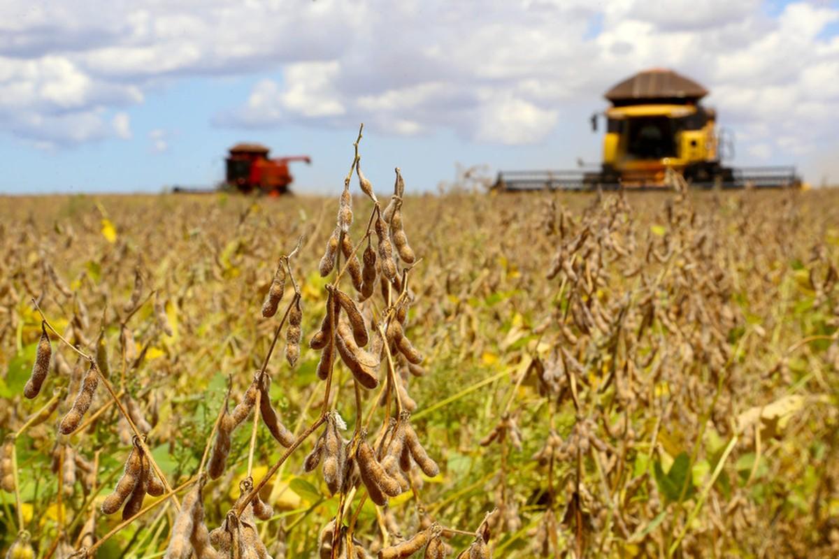 Paraná deve fechar safra de grãos com 40,8 milhões de toneladas colhidas, diz Deral