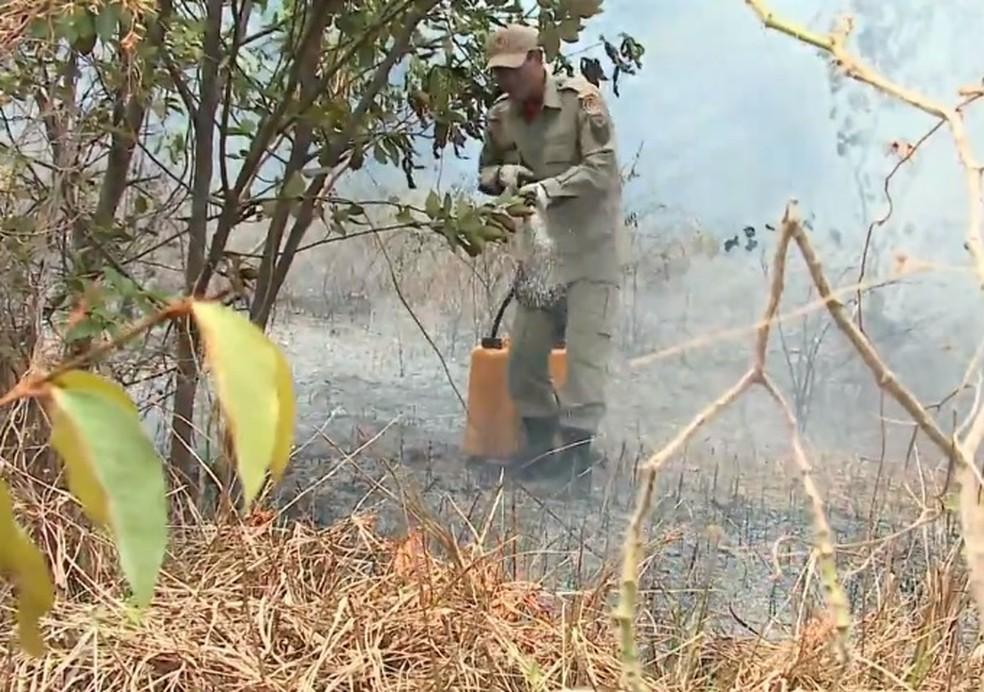 Bombeiros combatem queimadas no Maranhão (Foto: Reprodução / TV Mirante)
