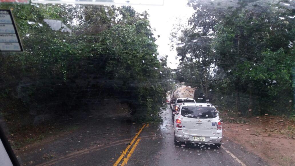 Forte chuva com rajadas de ventos derruba árvore e deixa trânsito lento na MG-290, em Borda da Mata, MG