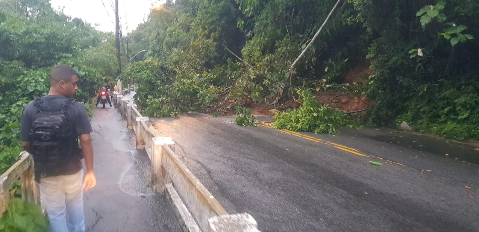 Árvore caiu e bloqueou o morro da Nova Cintra, em Santos — Foto: G1 Santos