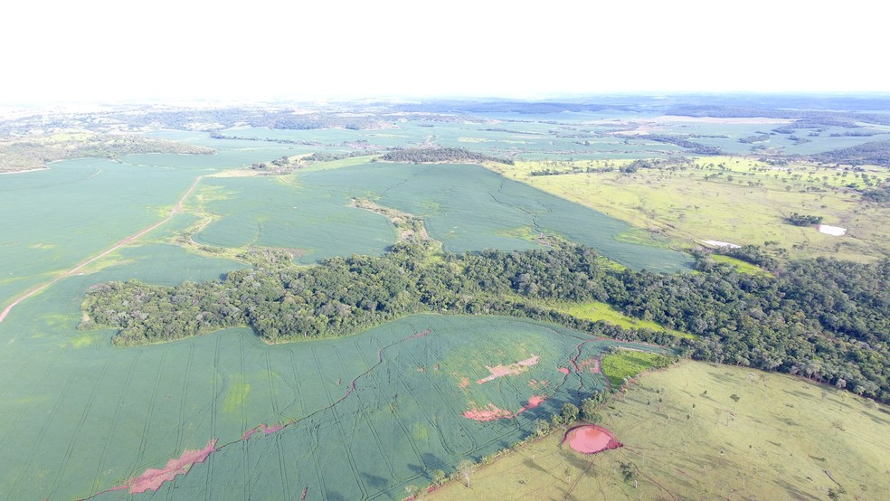 Imagem aérea da propriedade desmatada em Guia Lopes da Laguna (MS) (Foto: PMA/Divulgação)
