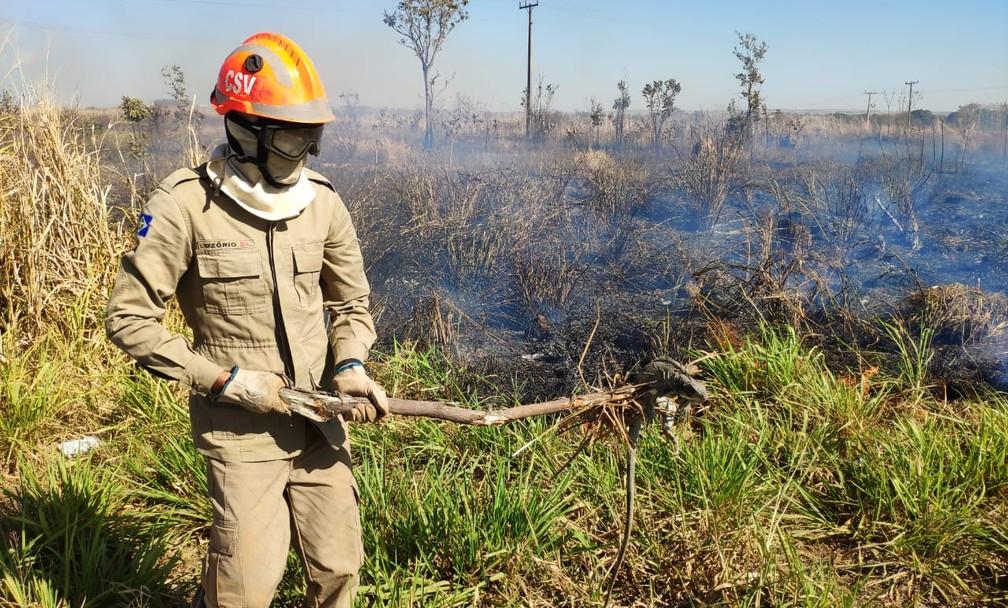 Iguana foi retirada de região de queimada em Paranatinga (MT) — Foto: Corpo de Bombeiros