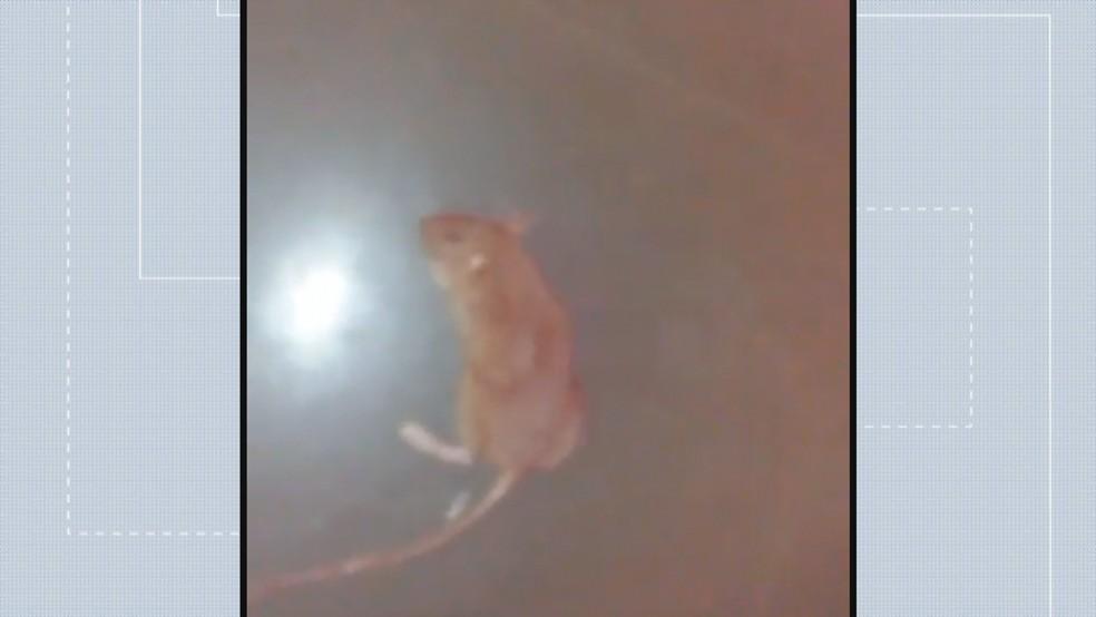 Rato morto por paciente no Hospital Regional de Taguatinga (Foto: Arquivo Pessoal/Reprodução)