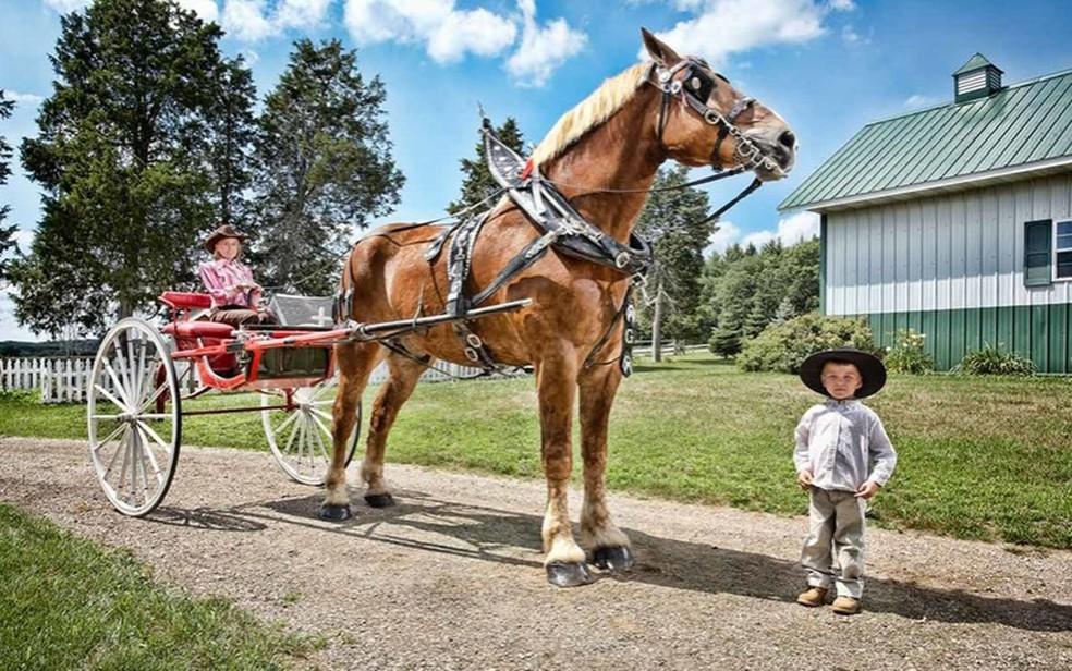 Big Jake foi certificado pelo Livro Guinness de Recordes como o cavalo vivo mais alto do mundo em 2010 — Foto: Divulgação/GuinnessWorldRecords