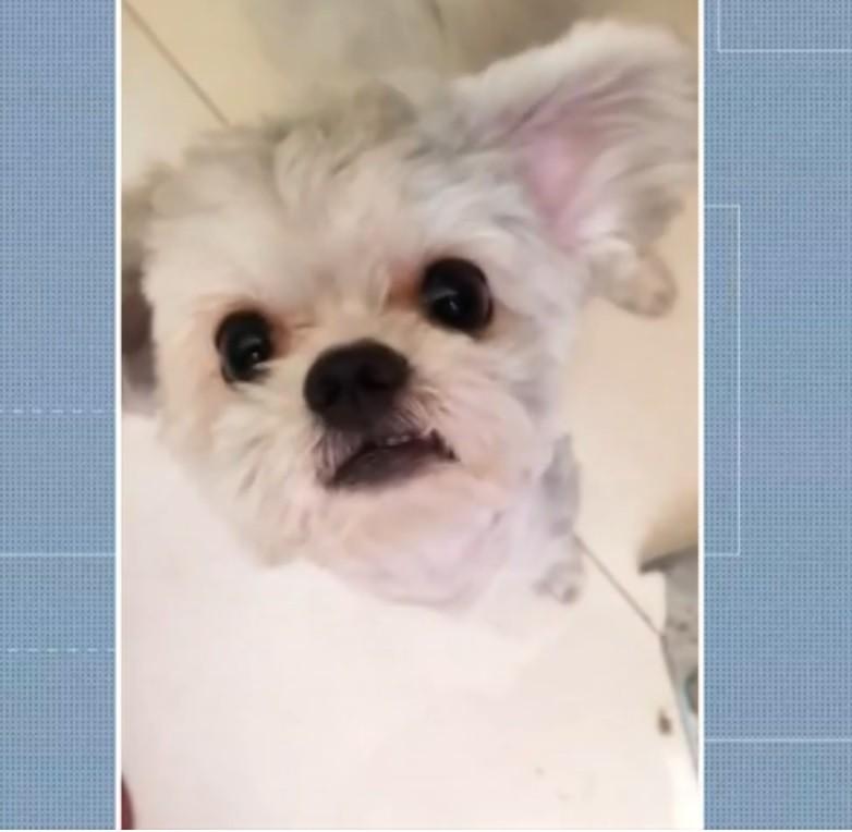 Cadela é salva por hóspede após ficar presa em incêndio dentro de casa em Cuiabá