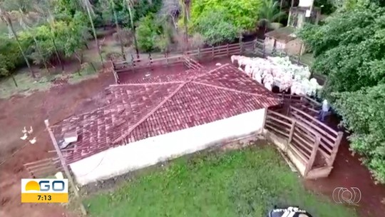 Polícia recupera mais de 50 cabeças de gado roubadas de fazenda em Trindade