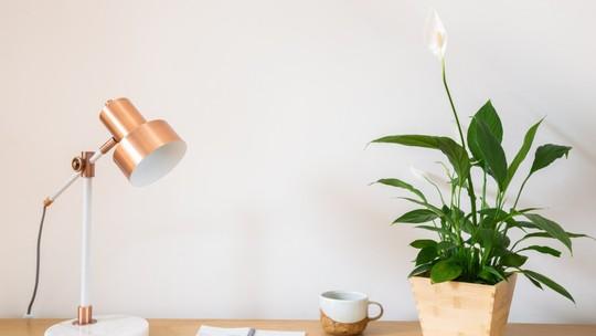 Especialista ensina dica 'milagrosa' para salvar as plantas na quarentena