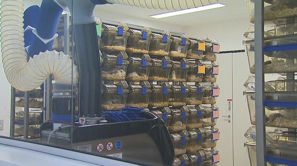 Camundongos são usados em pesquisa na USP em Ribeirão Preto — Foto: Ronaldo Gomes/EPTV