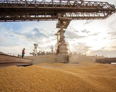Crescente demanda chinesa deve manter preço do milho em patamares recordes em 2021