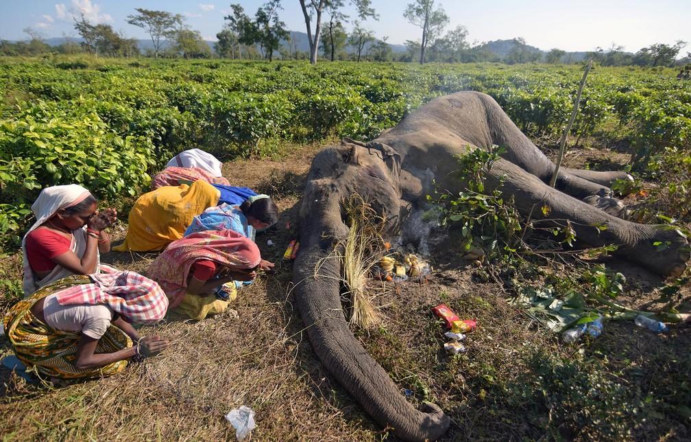 Mulheres fazem orações ajoelhadas diante da carcaça de um elefante que, segundo guardas florestais, morreu devido a feridas após lutar com outro animal da mesma espécie na noite da véspera, em Nagaon, no estado de Assam, na Índia — Foto: Anuwar Hazarika/Reuters