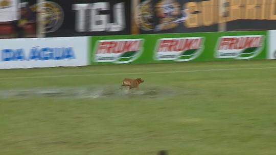 Cachorro invade gramado, dribla atletas e paralisa jogo do Catarinense duas vezes; vídeo