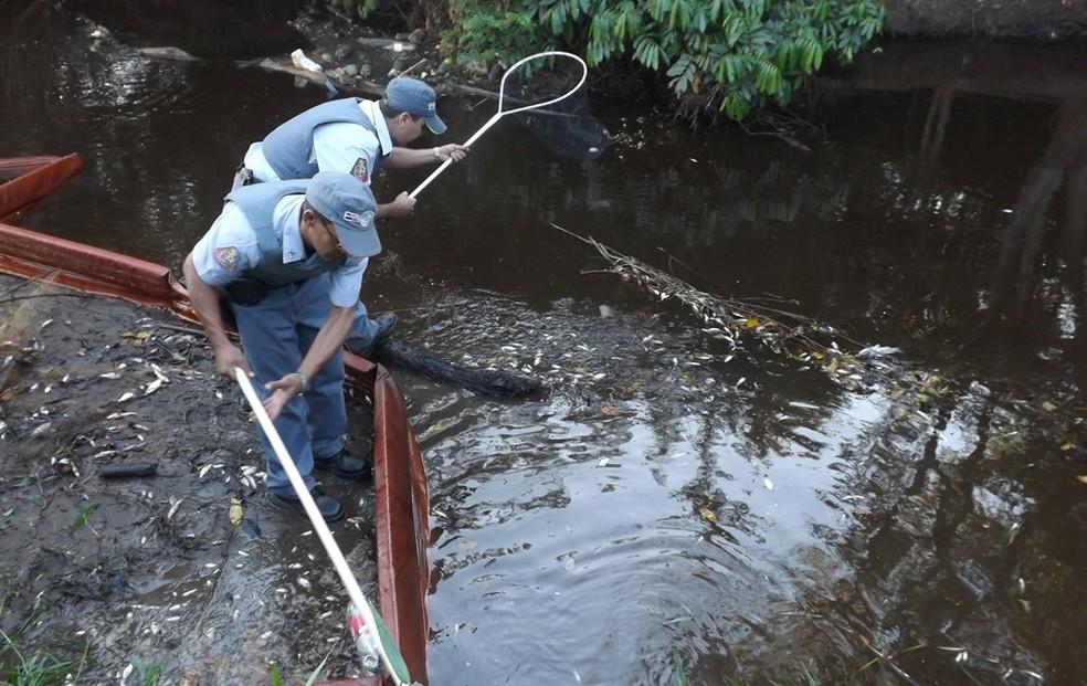 Milhares de peixes morreram (Foto: Marcos Lavezo / G1)