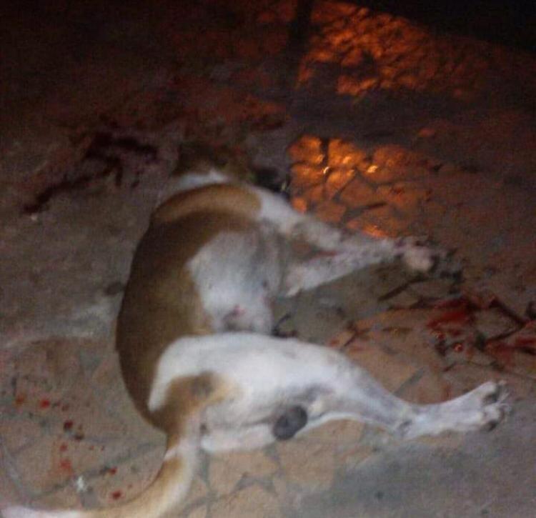 PM mata cachorro durante abordagem no bairro Jardim Belmonte, em Volta Redonda - Noticias