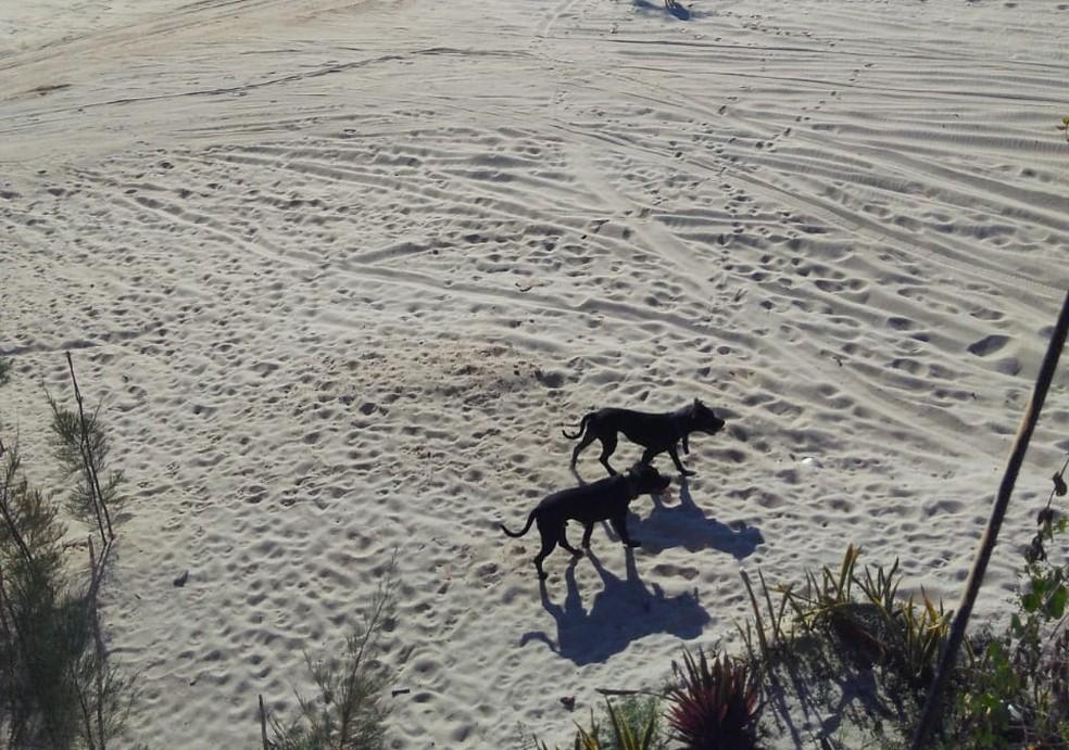 Cachorros pitbulls foram resgatados por uma equipe do BPTur após atacarem um homem. — Foto: Arquivo pessoal