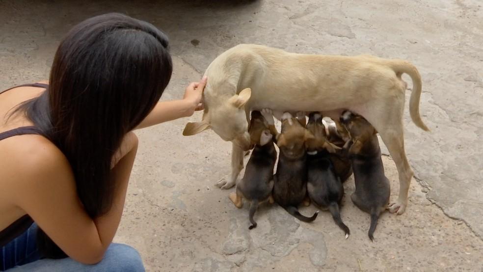 Mais de 14 mil animais vivem abandonados nas ruas da região metropolitana de Cuiabá — Foto: TV Centro América/Reprodução