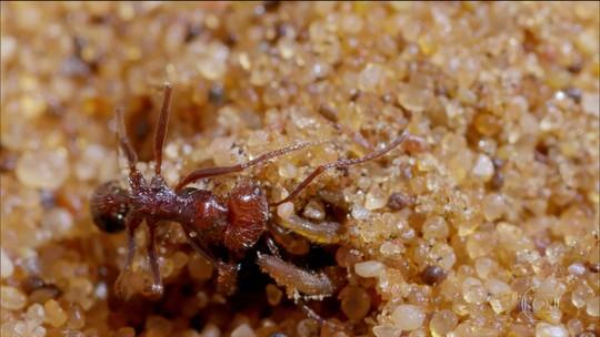 A Caçada: insetos caçam no deserto da Namíbia, na África, a 70°C