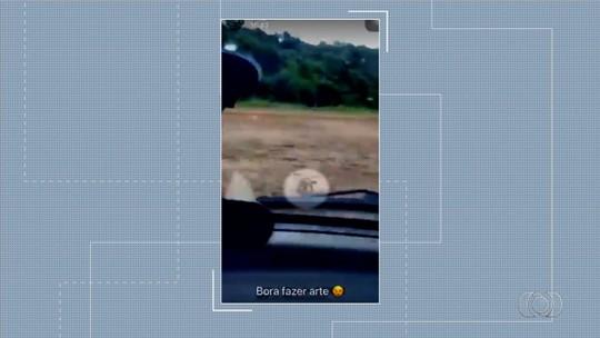 Vídeo mostra quando motorista persegue quatis em lavoura de Palminópolis
