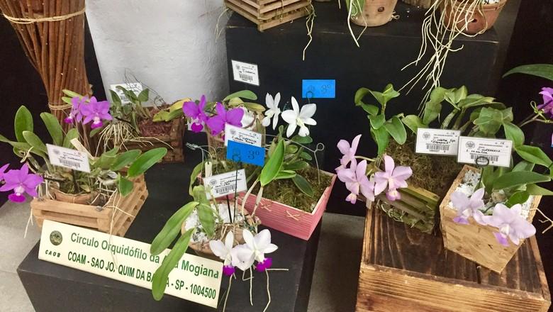 orquidea-flor-exposicao-aosp (Foto: Mariane Reghin)