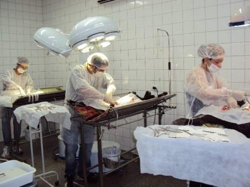Serviço de castração de animais domésticos é retomado em Divinópolis; agendamento será a partir de segunda-feira