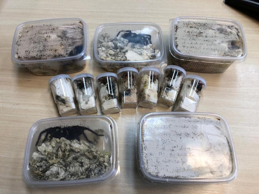 84 aracnídeos foram postados na Alemanha  — Foto: Foto: Polícia Federal