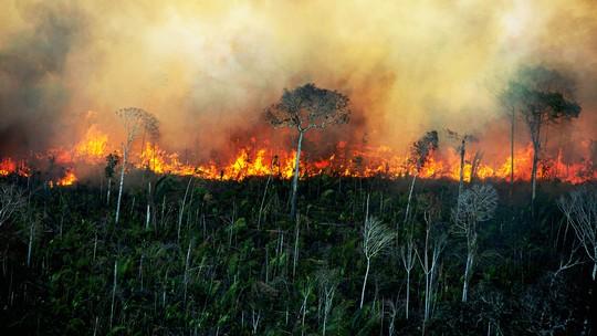 Foto: (Divulgação/Greenpeace)
