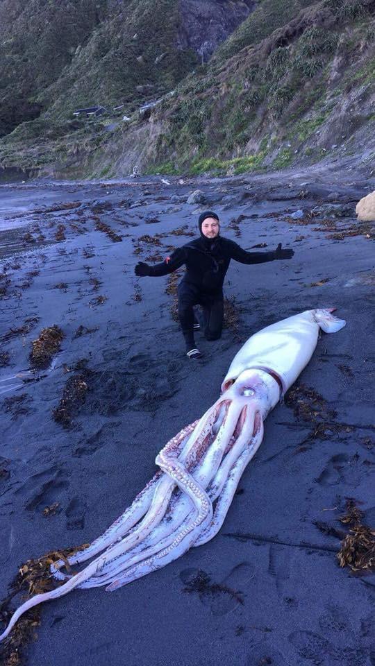 Lula-gigante foi encontrada por três irmãos na costa da Nova Zelândia (Foto: Reprodução/Facebook)