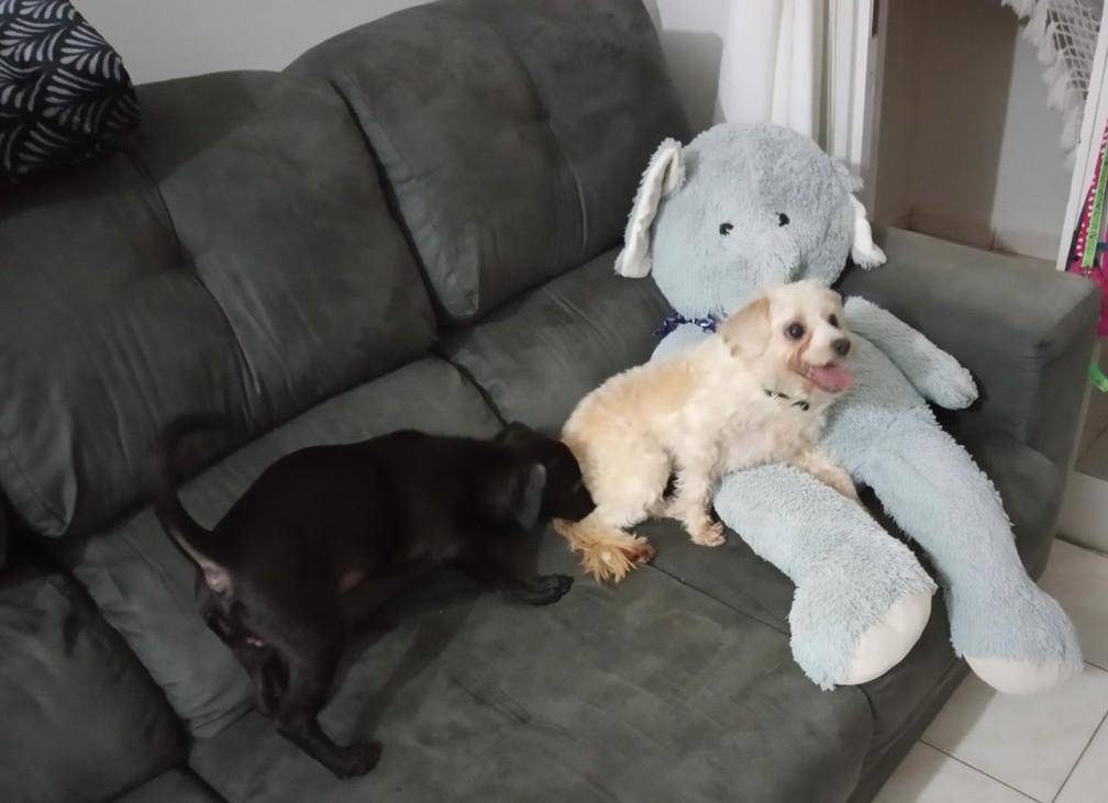 Vizinhas promoveram encontro dos cachorros — Foto: Arquivo pessoal